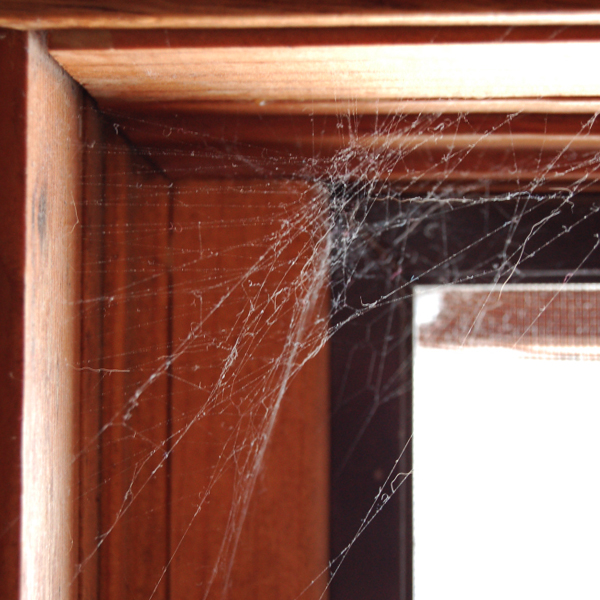 Spiderweb in corner of door, LawnWise for pest control services Murfreesboro TN, pest control services Smyrna TN, pest control services la vergne tn, pest control services spring hill tn, pest control services brentwood tn, pest control services franklin tn, pest control services nashville tn, mosquito control and lawn care.